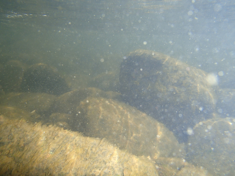 Underwater. Truckee River, Mayberry Park. Sept 4, 2015.