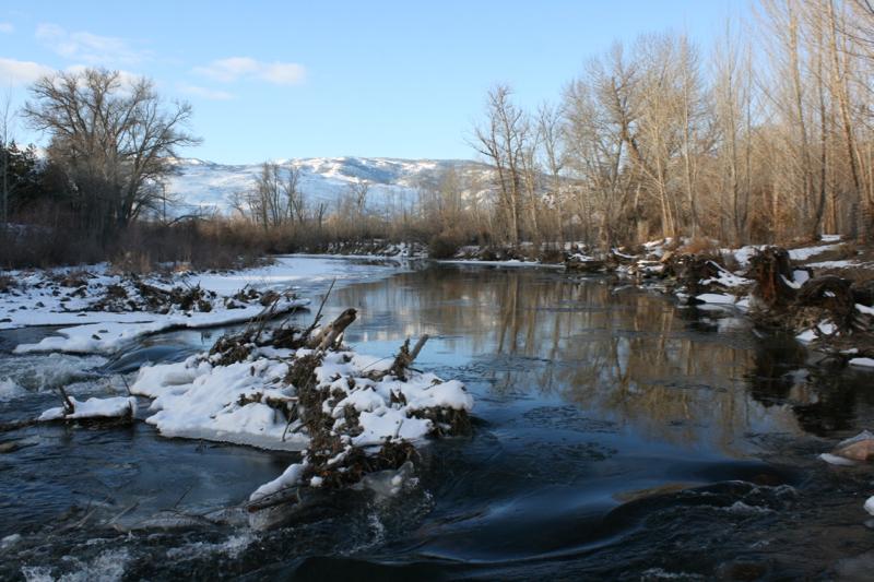 Beaver dam at Oxbow Park, January 2016.