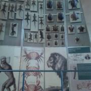 El Museo de Ciencias Naturales de Madrid ofrece una visita didáctica a los niños.