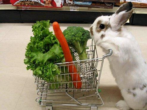 Alimentación del conejo enano