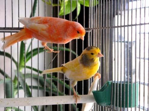 Pájaros y fumadores