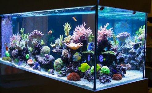 Acuario y peces sanos
