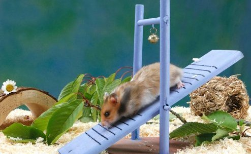 Delicado Hamster
