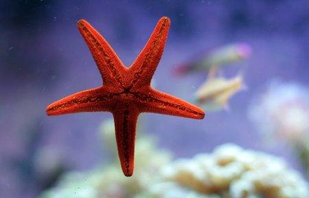 Seca la estrella de mar