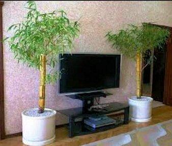 Plantas como protección
