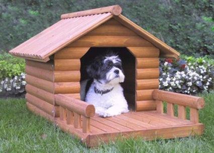 Refugio para perro