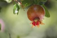 Spis en frukt rett fra treet! Det er lov - men ikke å plukke med deg for mye.