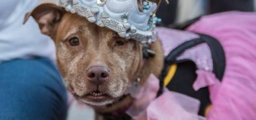 prom queen doggie