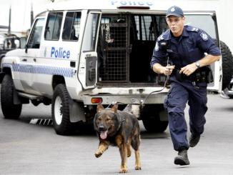Waco the police sniffer dog dies after being overworked in Aussie summer heat!