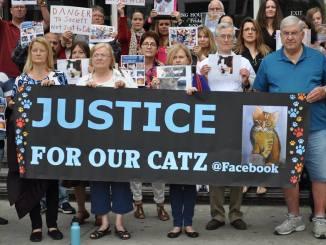 Crazed cat killer sexually assaults & murders 21 kittys