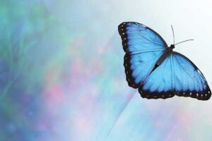 Butterfly graphic depicting profound effects subtle causes that can influence moral behavior