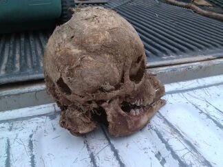 bigfoot skull 2