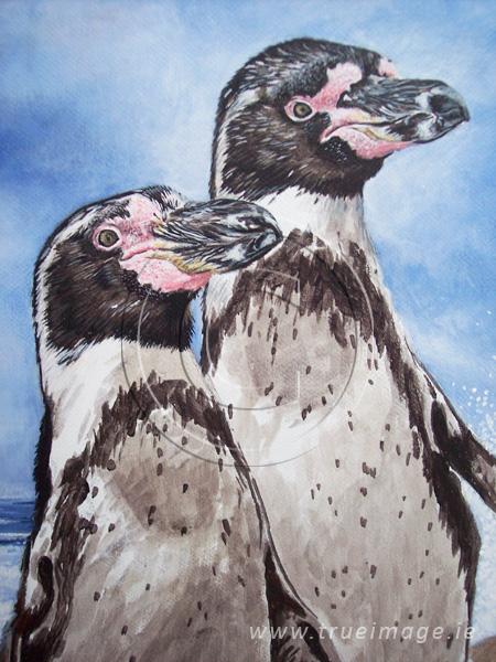 Humboldt penguins painting in progress - step 3