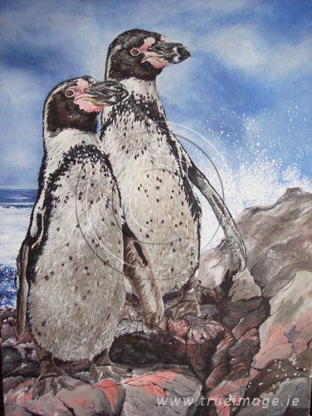 Humboldt penguins painting in progress - step 4