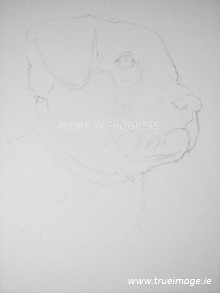 Outline drawing of a puppy portrait in pencil