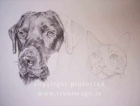 Dog and cat portrait in progress - step 5