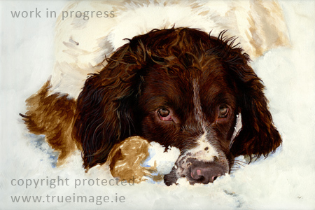springer spaniel dog portrait painting in acrylic - work in progress