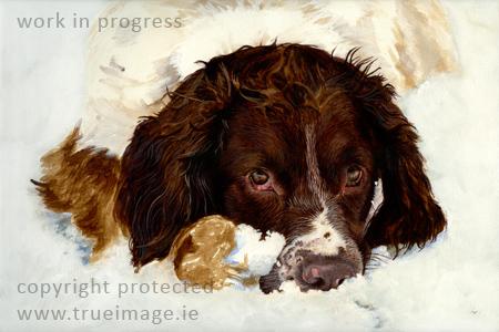 springer spaniel dog portrait painting in acrylic - work in progress