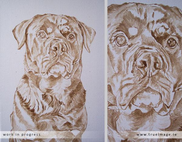 rottweiler dog portrait in progress - stage 1