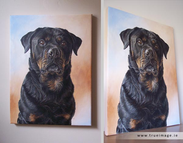 rottweiler dog portrait painting on canvas