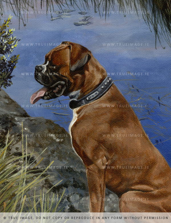 boxer dog portrait painting detail