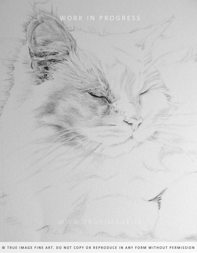 cat portrait in progress