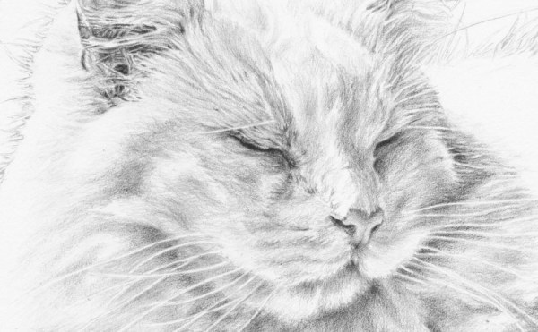detail of white cat portrait drawing