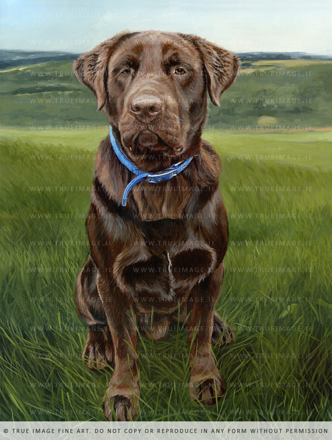 chocolate labrador painting