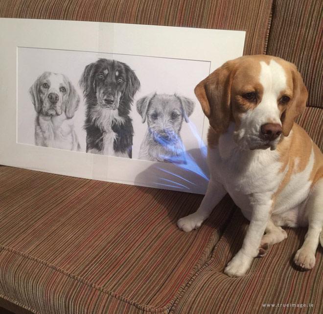 Beagle sitting beside her portrait