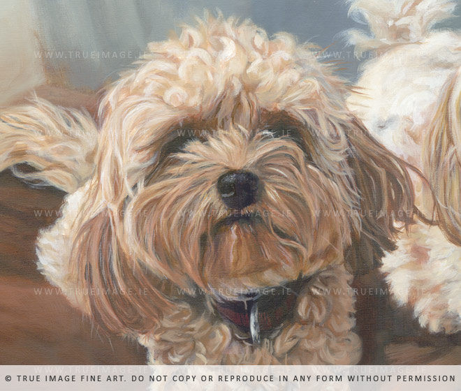 cavachon portrait painting - detail
