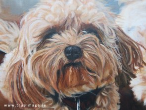 cavachon painting detail