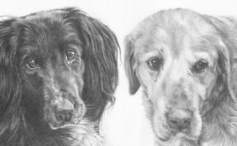 collie and labrador drawing