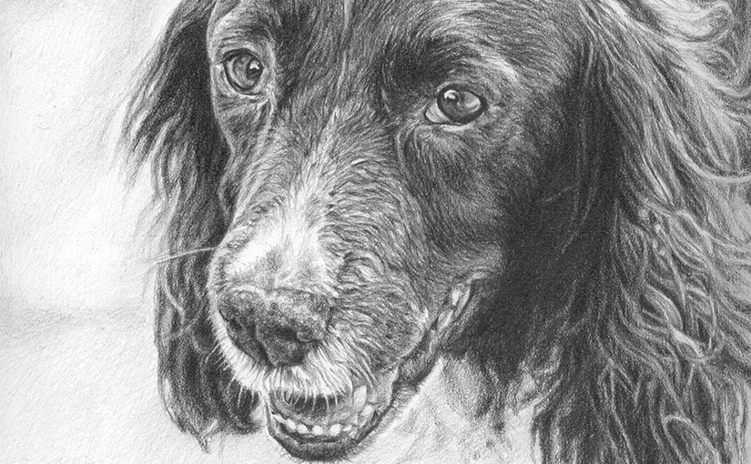 dog drawing detail