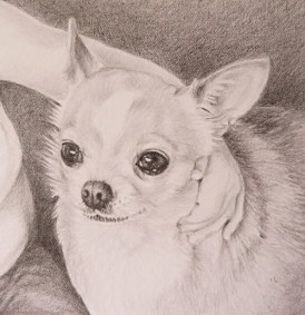 chihuahua drawing detail
