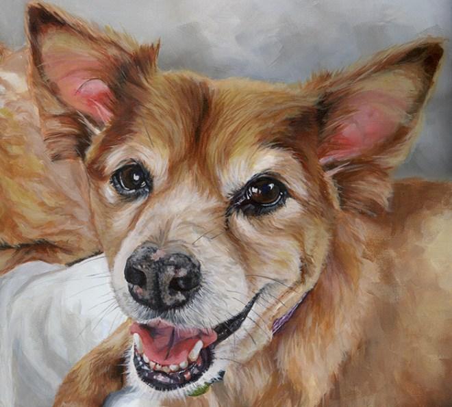 pomeranian cross dog portrait