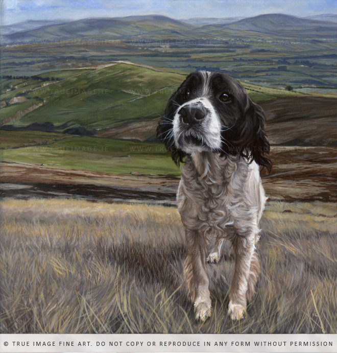 springer spaniel dog painting