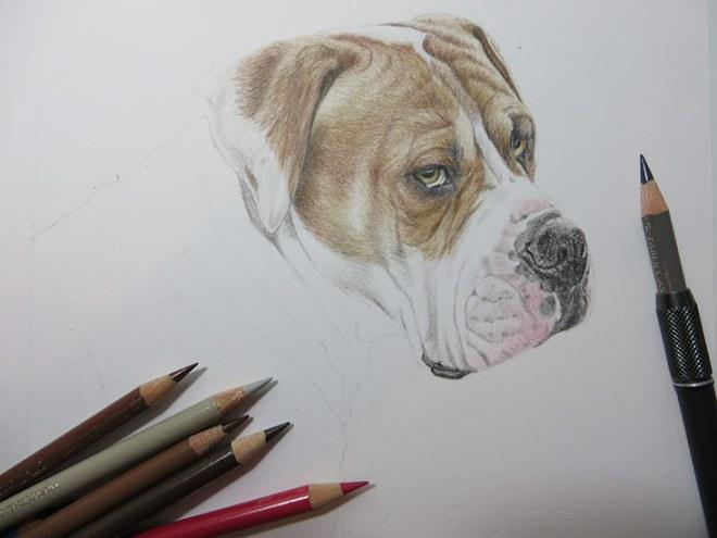 dog portrait in progress