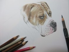 dog portrait in progress