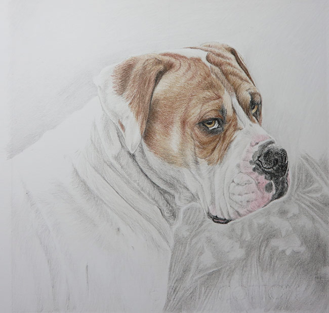 boxer drawing progress