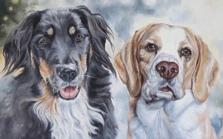 collie beagle portrait