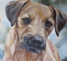 terrier portrait
