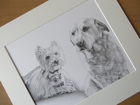 yorkie and lab drawing