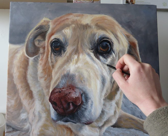 detailing a dog portrait