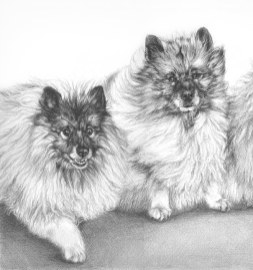 two keeshonds drawing