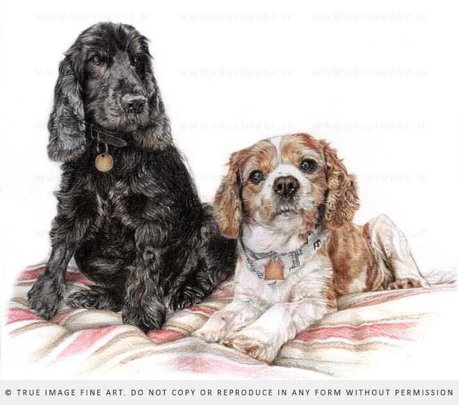 dogs in coloured pencil