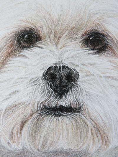 dog portrait detail