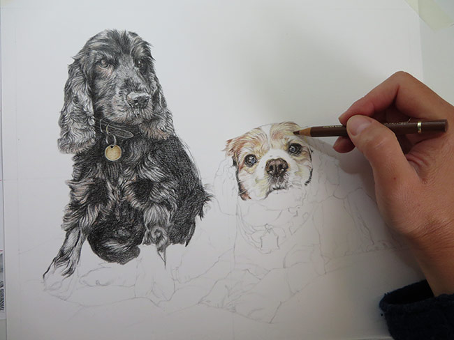 drawing a dog portrait