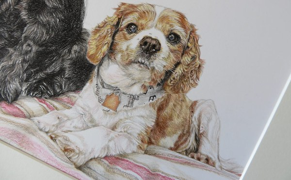 king charles cavalier dog portrait detail