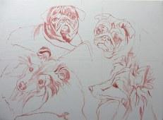 dog portrait sketch