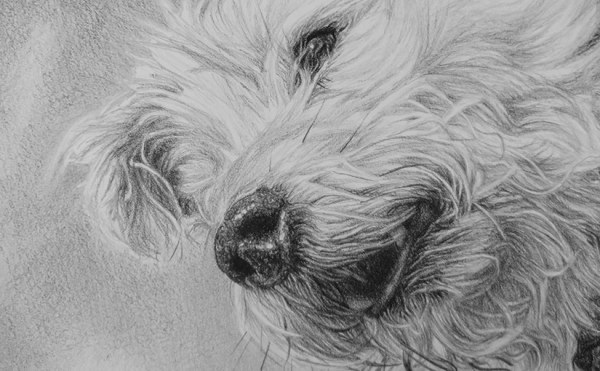 detail of a pet portrait
